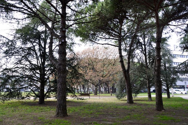 Parco Giovanni Paolo II (Municipio), Federica Giorgetti 2018